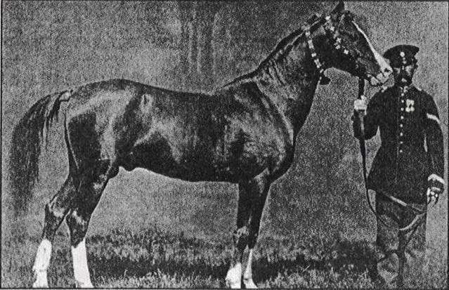 Karabakh_Horse