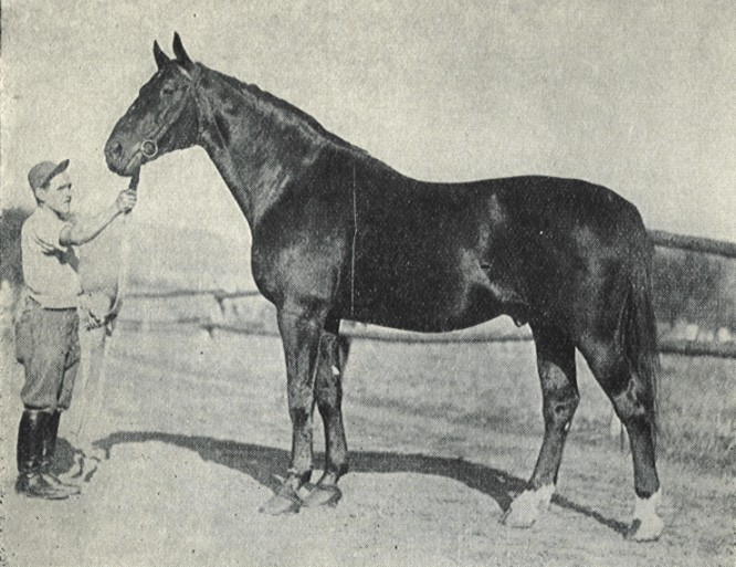 http://www.stablemade.com/horsecare/images/Articles/nonius2.jpg