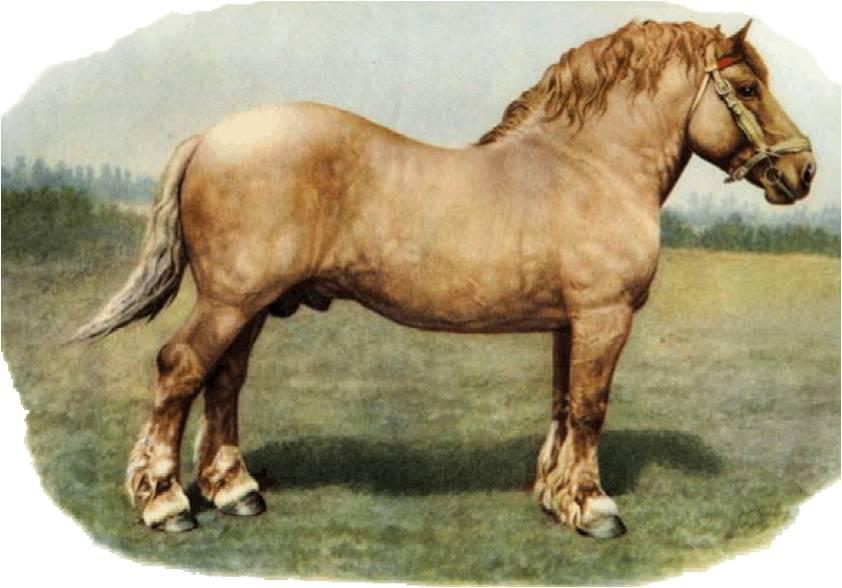 Dünyanın en büyük atları İngiliz ağır ağırlıklardır