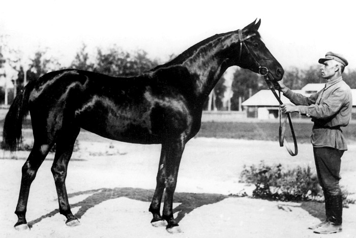 Biologia, 1934 (Obrazchik-Balalaika)(olimpia-horse