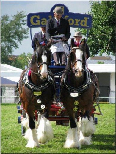 Shire Horses (horse-village