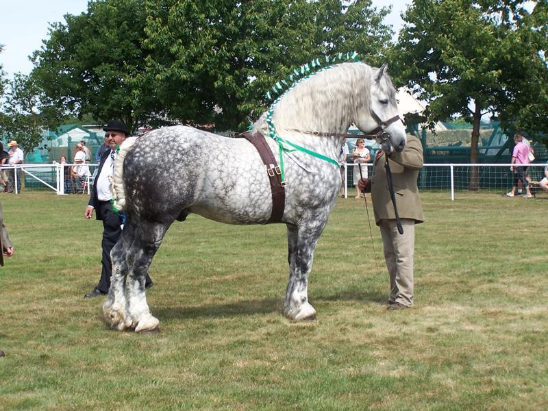 Percheron (horsegroomingsupplies