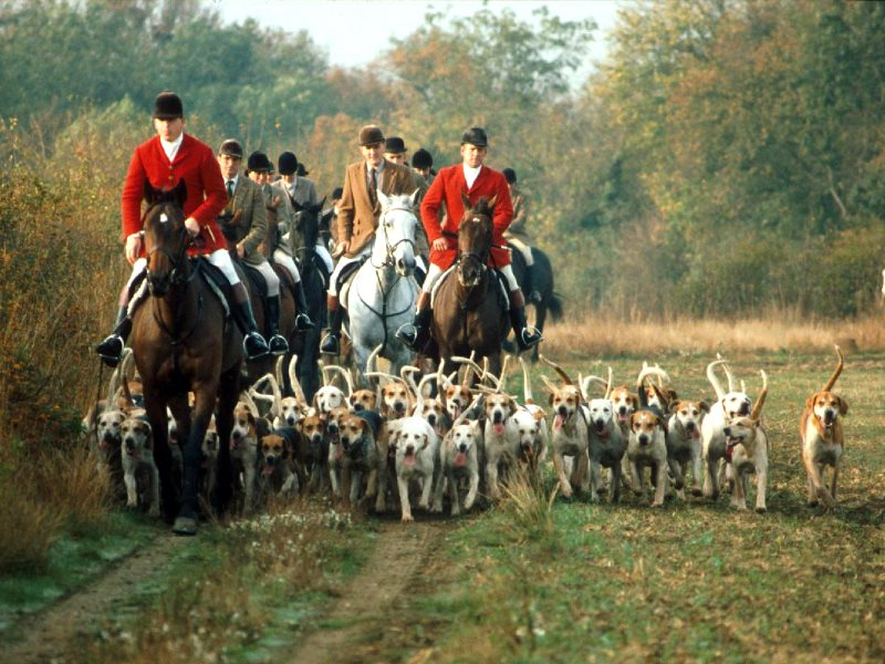 Foxhunting-(theecologist