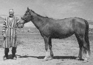 http://www.ansi.okstate.edu/breeds/horses/lokai/lokai2.gif