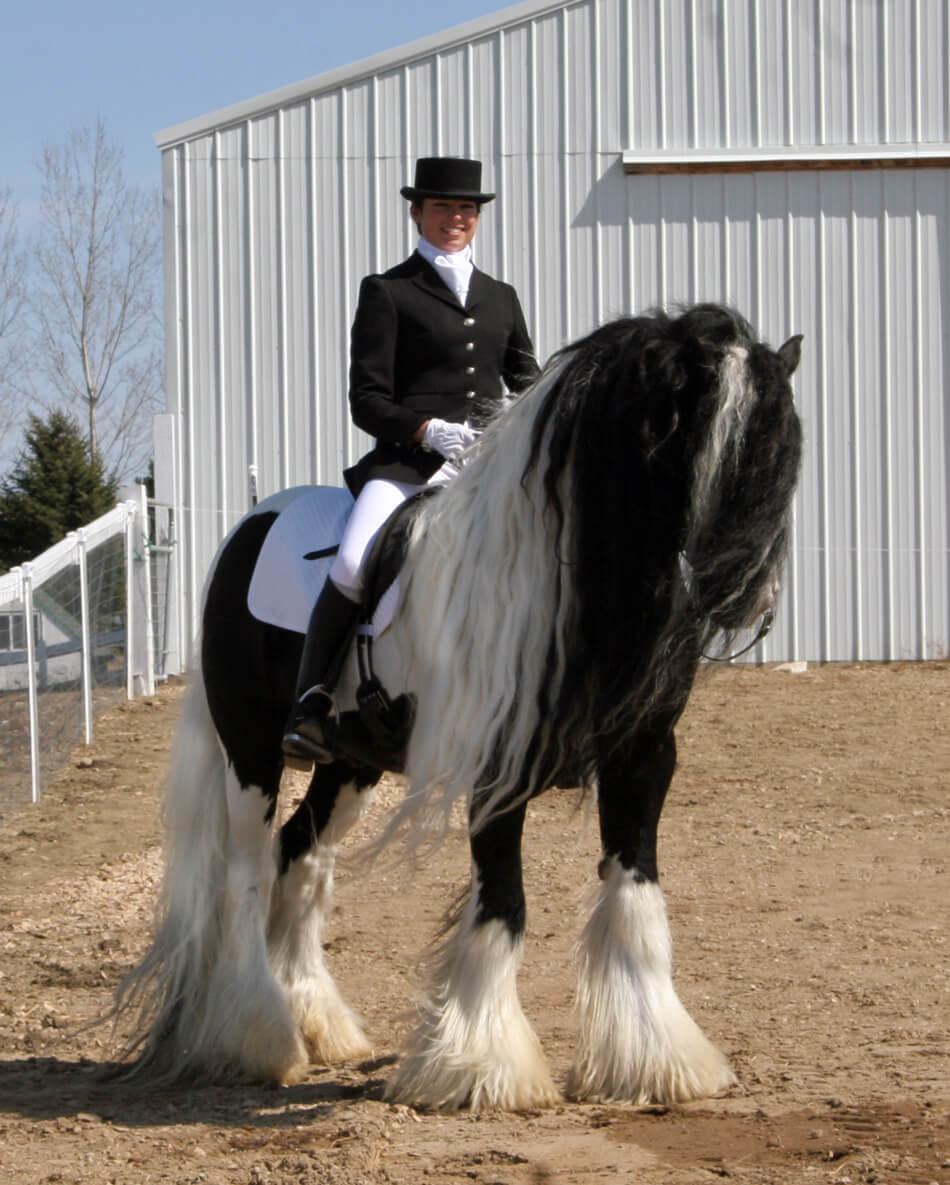 gypsy-horse-stersarah (lakeridgegypsy
