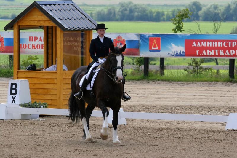 Владимирский тяжеловоз (equestrian (4)
