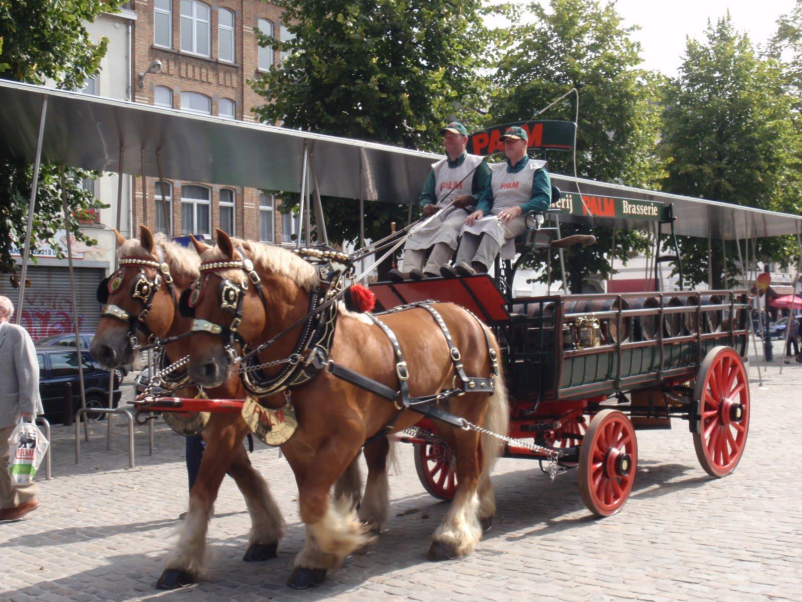 Belgian Draft Horse (loelandpaula