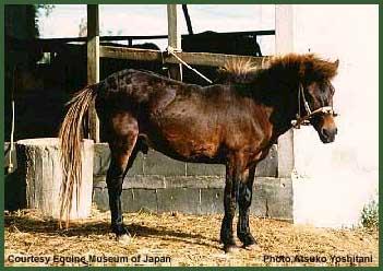 Miyako-Horse (hevosmaailma