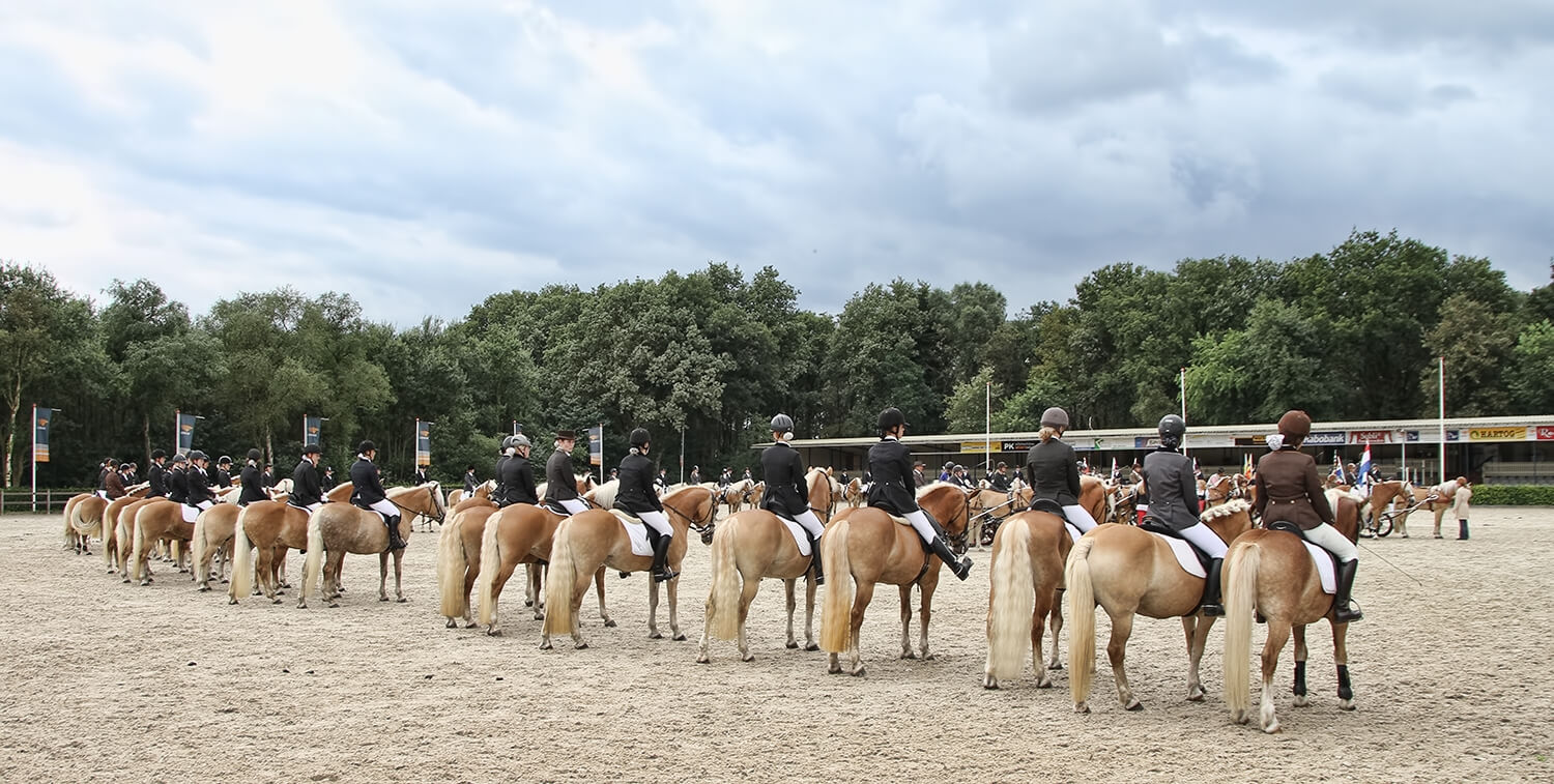 Ermelo Haflinger Evenement 8flickr9 4
