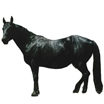 Yili Horse 1