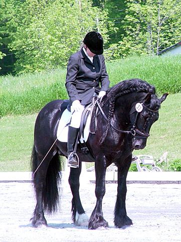 Dales Pony (briarhillfarm