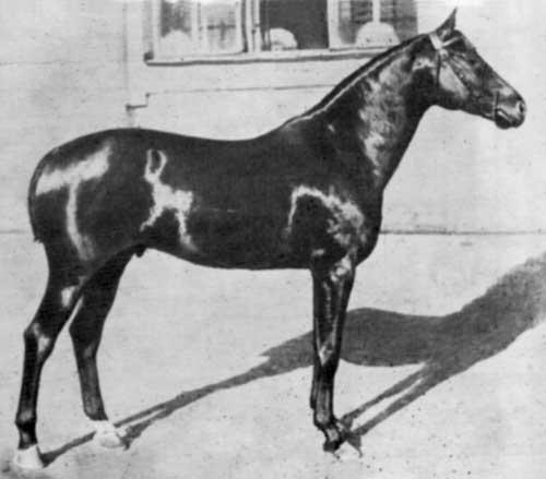 Orlov-Rostopchin Bayanchik (horses