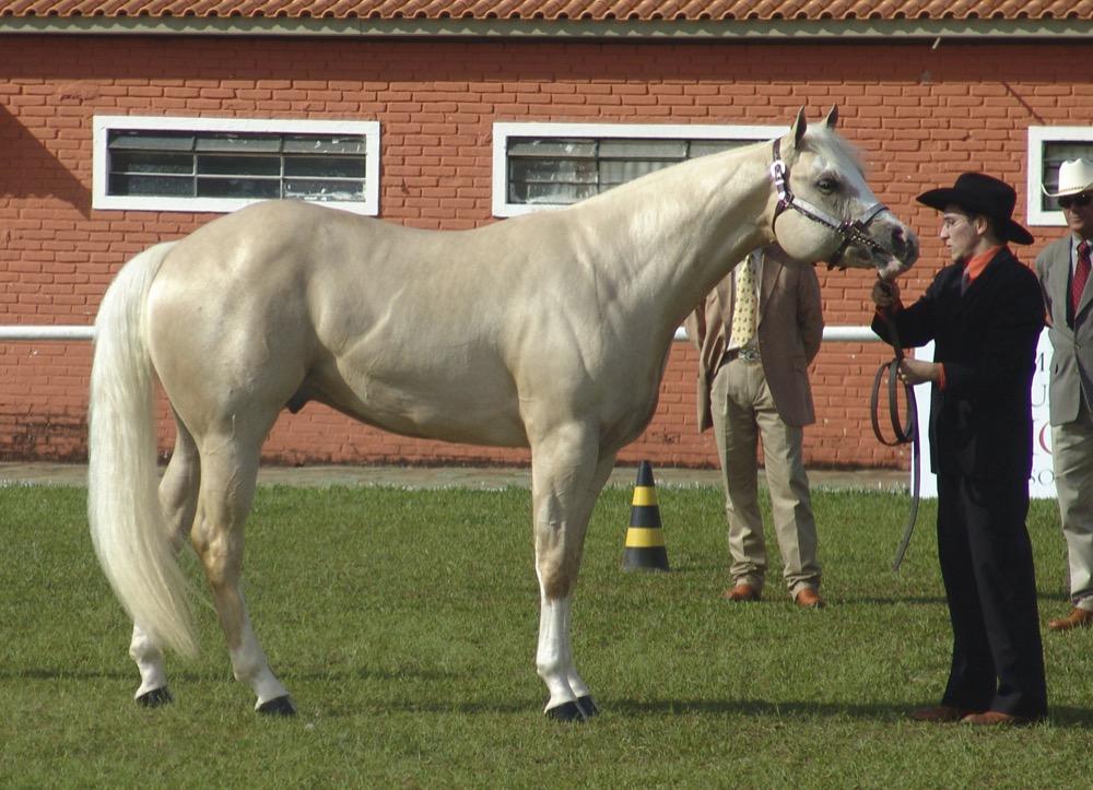 Quarter_Horse(REFON)