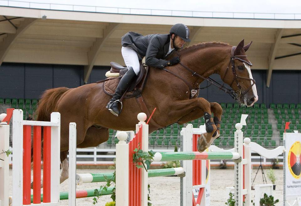 Latvian horse (latviandreamhorses