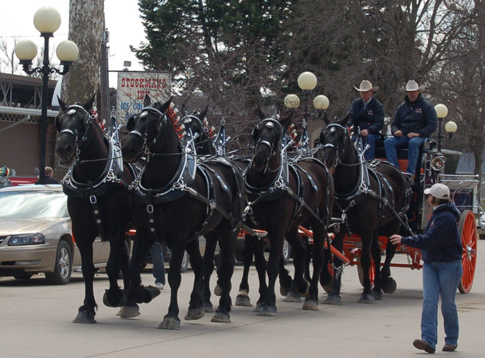Percheron-horse-team-(knrarabians