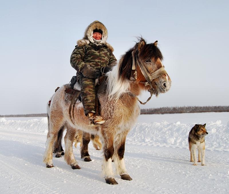 Yakut Atı (i