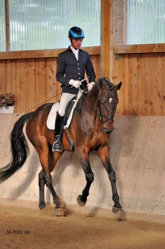 Landesverband Bayerischer Pferdezüchter e