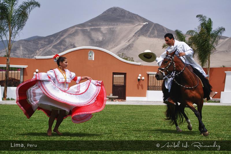 Peruvian Paso Fino (winningcolorspasos
