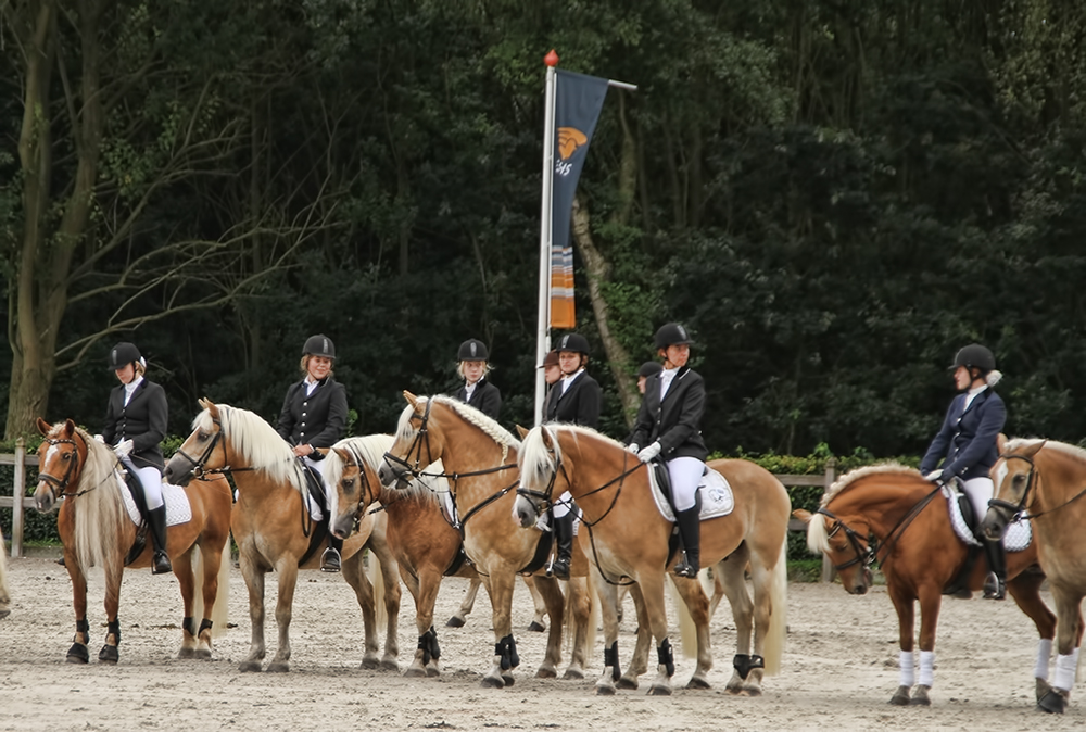 Ermelo Haflinger Evenement 8flickr9 2