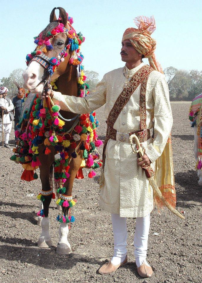 Marwari Horse (xx