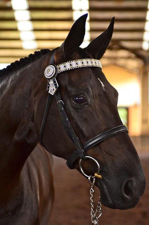 Australian Warmblood Horse Association (AWHA) (facebook