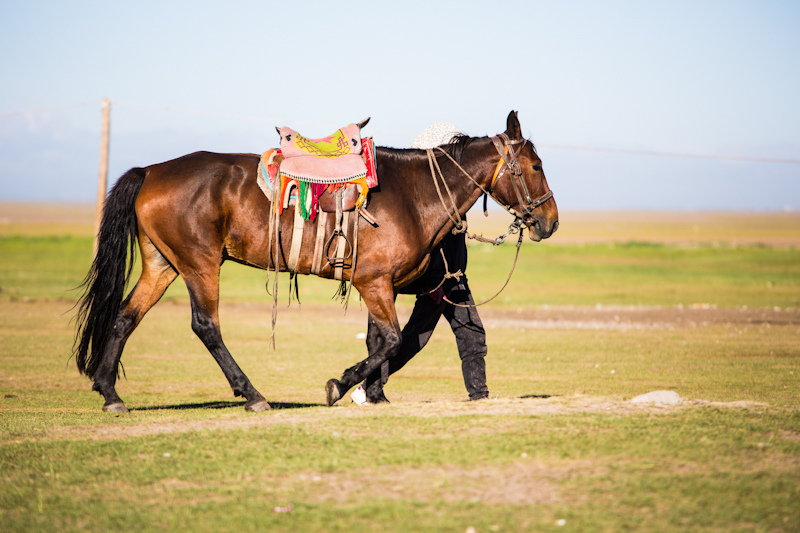 Yili (Xinjiang) Horse (flickr