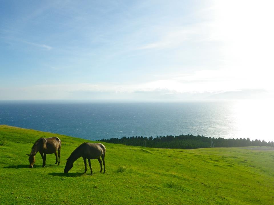 Misaki Horse (flickr