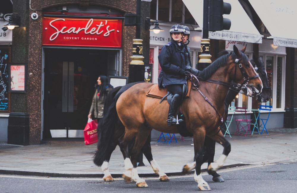 At Irklarını Nasıl Sınıflandırırız Insan Ve Onun En Kadim
