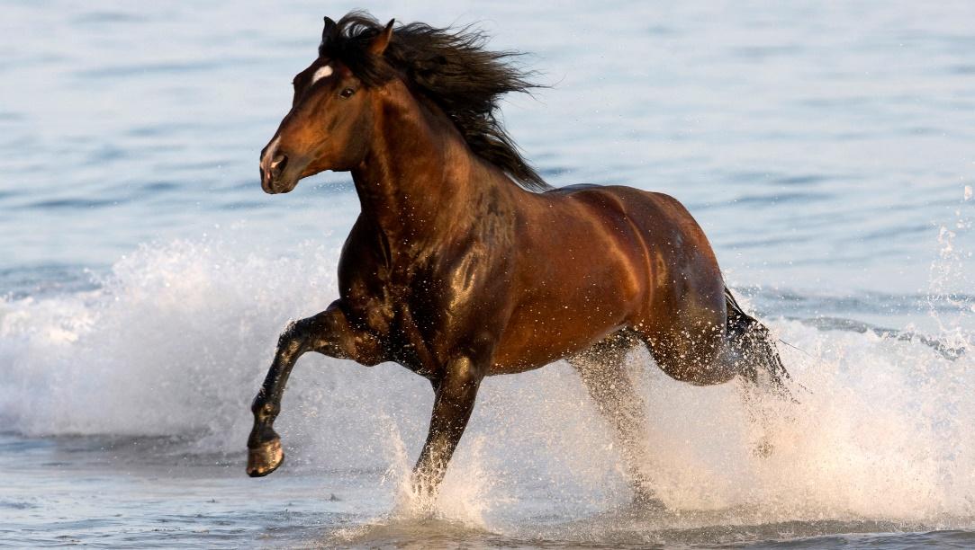 Azteca Horse (flickr