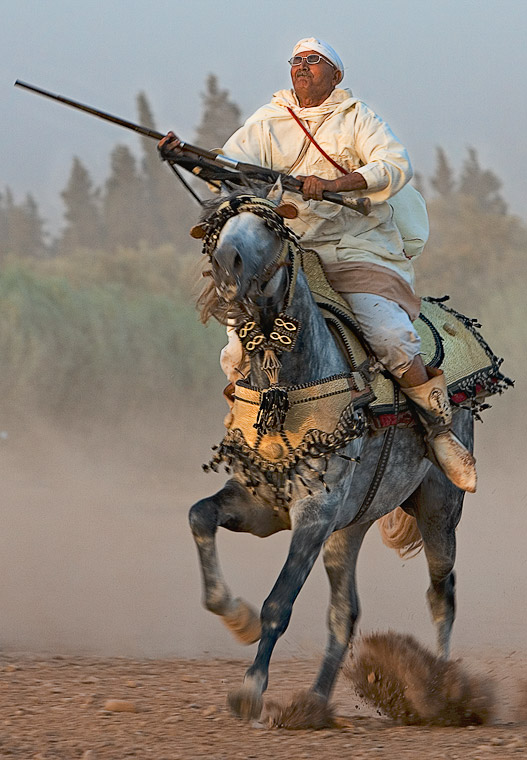 Barb Horse morocco_horse_rider_photo (digital-art-gallery