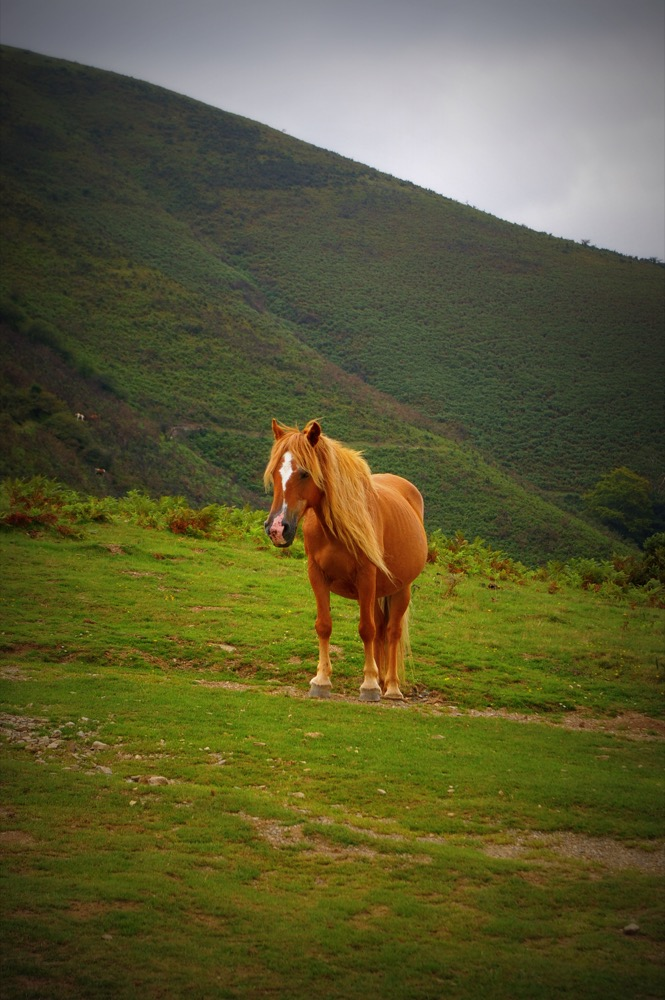 Pottock Horse (flickr