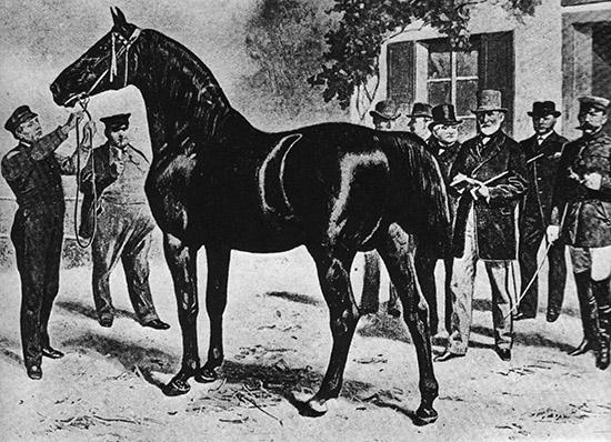 http://www.horsemagazine.com/thm/wp-content/uploads/2014/11/OldenburgLicensing.jpg