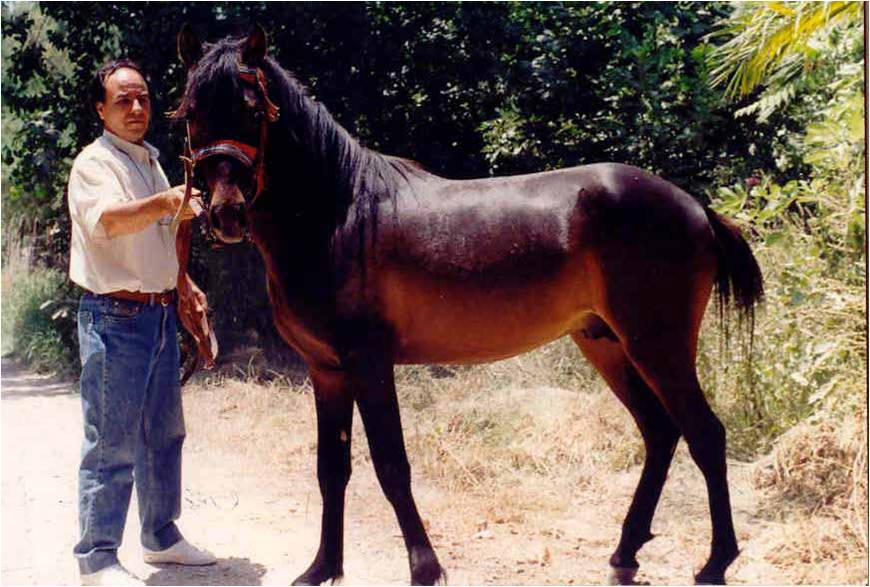Creata Pony (Menegatos)