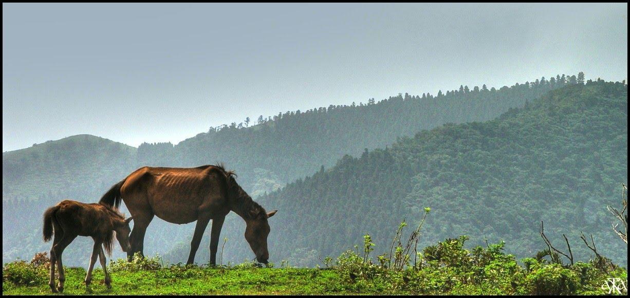 Misaki Horse (panoramio