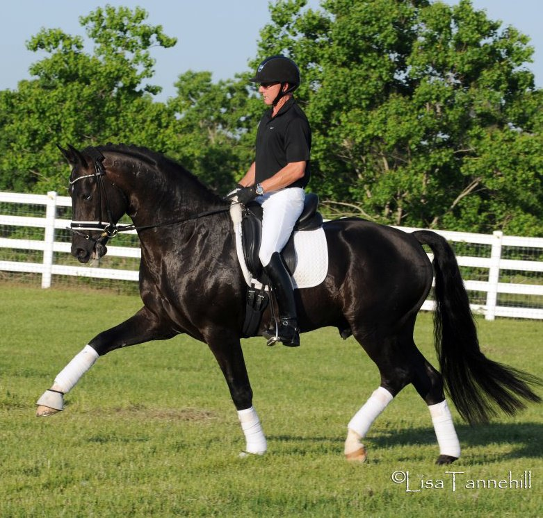 Supremat_2013_Stallion_Book (oldenburghorse