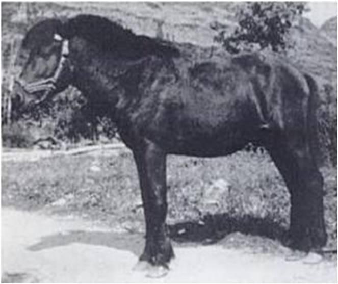 Baise Pony (Hendricks, 1995) 1