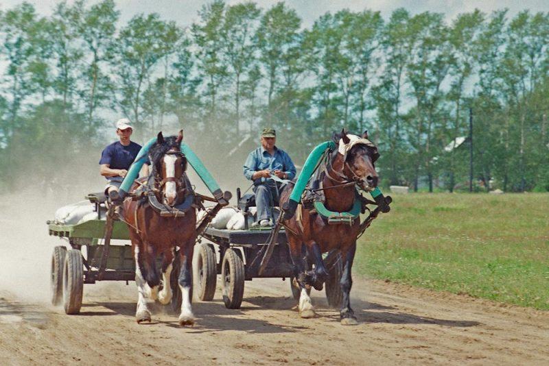 Владимирский тяжеловоз (equestrian (3)