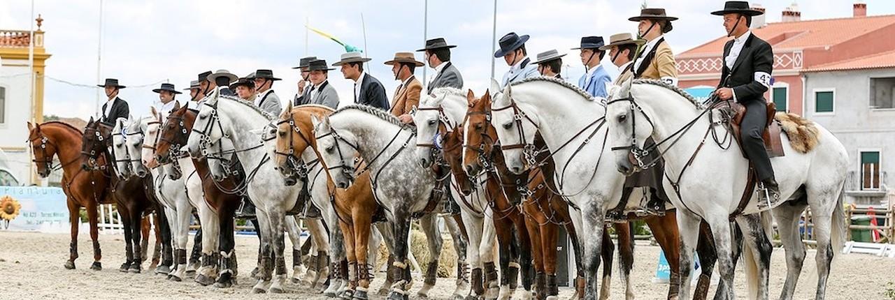 http://www.lusitanohorsefinder.com/wp-content/uploads/2014/10/working-equitation-banner1-1280x430.jpg