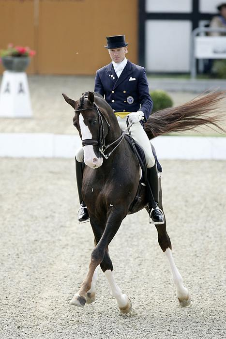 Swedish Warmblood (tumblr