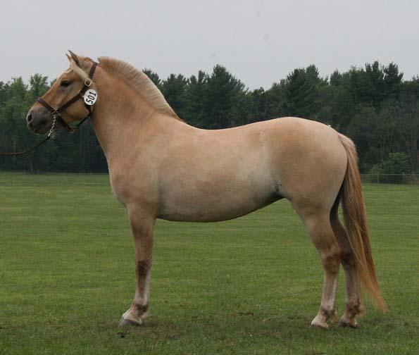 Fijord Horse (norskwoodworks
