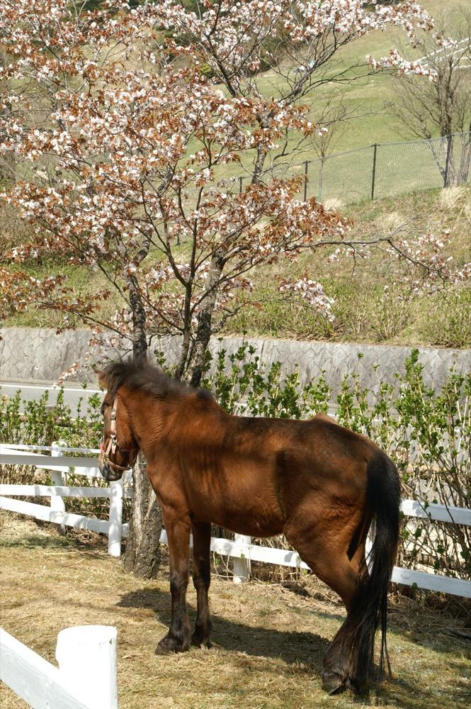 Yonaguni Horse (commons