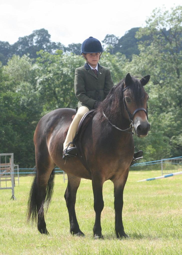 Exmoore Pony (theexmoorpony