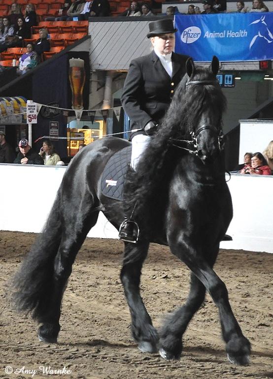 Friesian horse (flickr