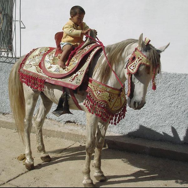 Barb Horse (2
